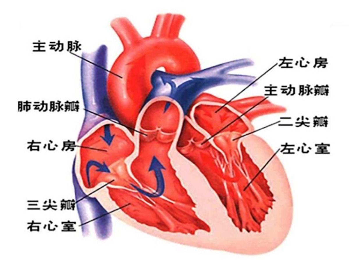 """不开刀、换心""""门""""——山一大一附院心脏外科成功应用新型VitaFlow瓣膜完成  高龄患者TAVR手术"""